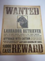 Blechschild - Wanted - Black Labrador Retriever - 31,5 x...