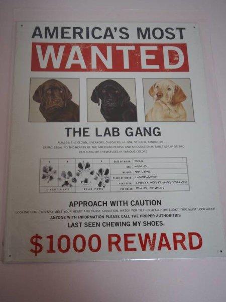 Blechschild - America´s Most Wanted - The Labrador Gang - 31,5 x 40,5 cm
